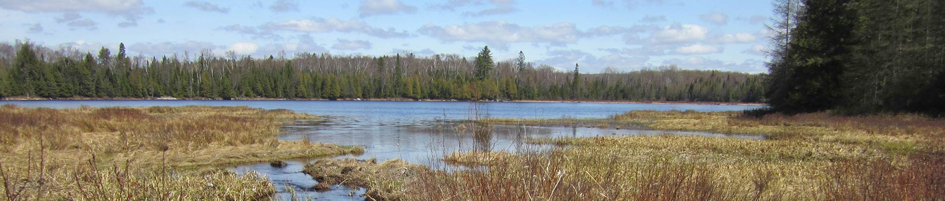 A view of Monck Lake from a reedy marsh along the portage.