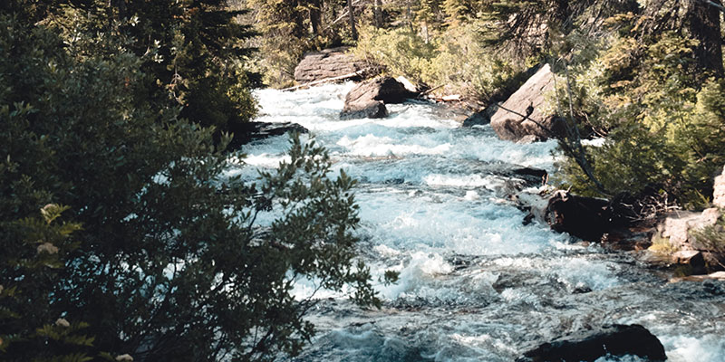 A stream overflows with rushing water.