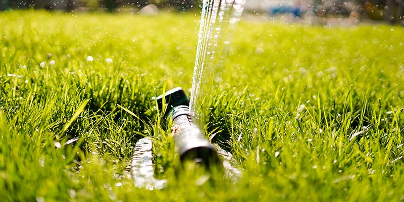 A sprinkler water lush green grass on a sunny day.